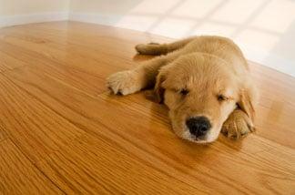 Hardwood Floor Cleaning And Dust Free Refinishing Coatsville